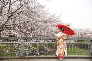 桜と一緒に成人式の前撮りはいかがですか?
